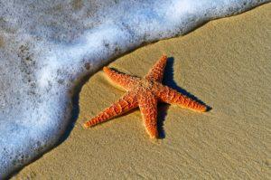 Ein Seestern und das Meer der Möglichkeiten